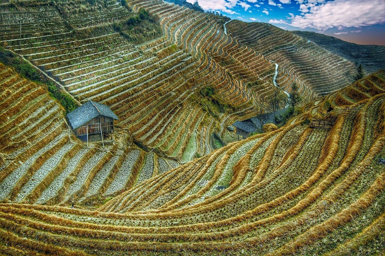 rice-field-2513023_1280